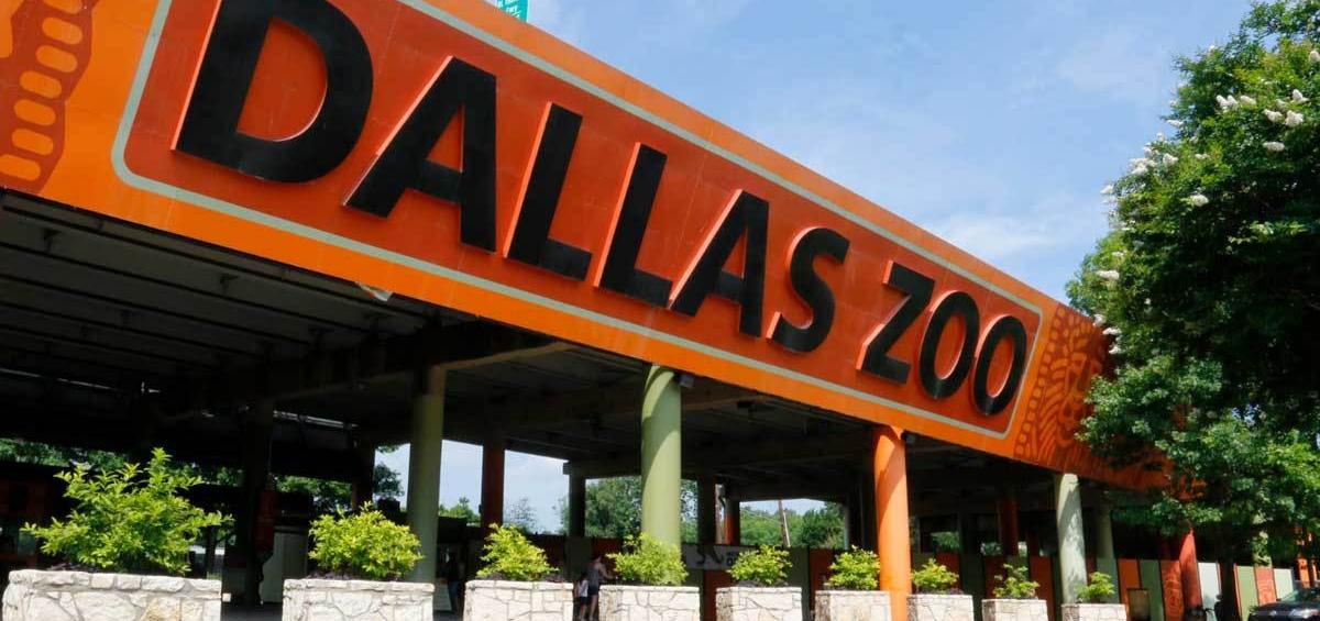 Gradina zoologica din Dallas foloseste Powersoft Deva pentru a reaminti vizitatorilor masurile de siguranta COVID-19