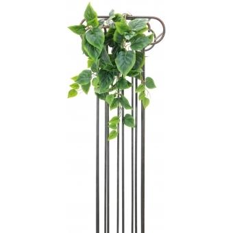 EUROPALMS Ivy bush, 60cm #2