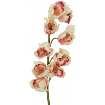 EUROPALMS Cymbidium spray, cream-pink, 90cm #2