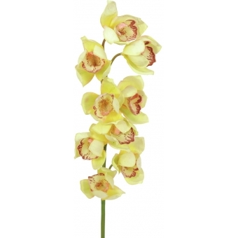 EUROPALMS Cymbidium spray, yellow, 90cm #2
