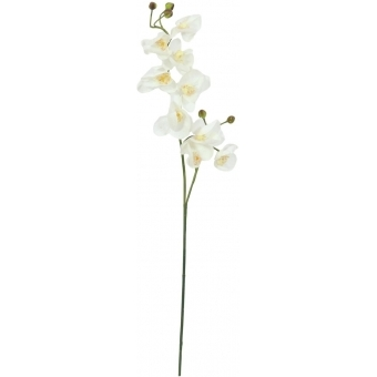 EUROPALMS Orchid spray, cream-white, 100cm