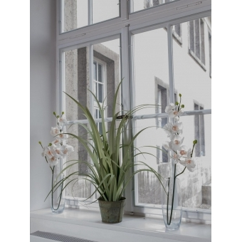 EUROPALMS Orchid spray, cream-white, 100cm #3