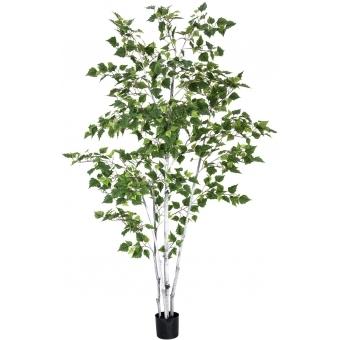 EUROPALMS Birch Tree, 210cm