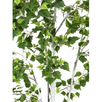 EUROPALMS Birch Tree, 210cm #2