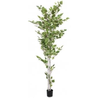 EUROPALMS Birch Tree, 210cm #3