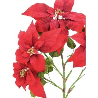 EUROPALMS Poinsettia bush, red, 60cm #2