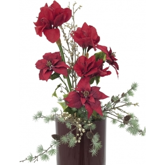 EUROPALMS Poinsettia bush, red, 60cm #4