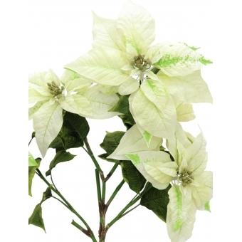 EUROPALMS Poinsettia bush, cream, 60cm #2