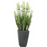 EUROPALMS Lavender, cream, in pot, 45cm