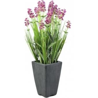 EUROPALMS Lavender, rose, in pot, 45cm