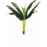 EUROPALMS Banana tree, 150cm