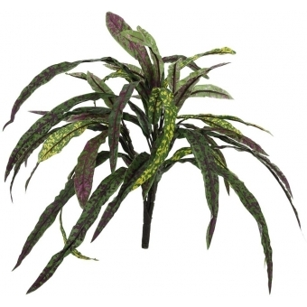EUROPALMS Croton, 40cm