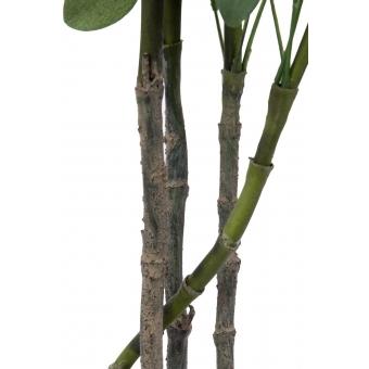 EUROPALMS Schefflera, 90cm #2