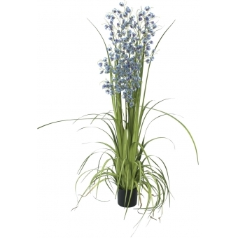 EUROPALMS Orchid grass, purple-blue, 140cm