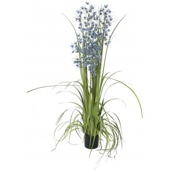 EUROPALMS Orchid grass, purple-blue, 140cm