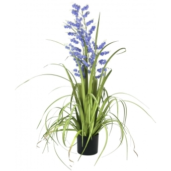 EUROPALMS Bellflower, purple, 105cm