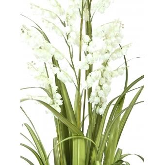 EUROPALMS Bellflower, white, 105cm #2
