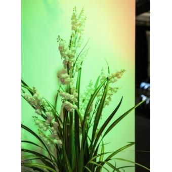 EUROPALMS Bellflower, white, 105cm #5