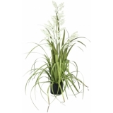 EUROPALMS Bellflower, white, 105cm