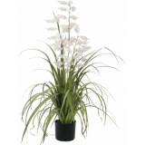 EUROPALMS Bellflower, rose, 105cm
