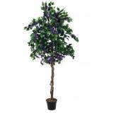 EUROPALMS Bougainvillea, lavender, 150cm