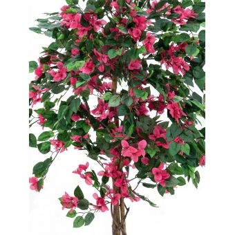 EUROPALMS Bougainvillea, red, 150cm #2