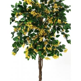 EUROPALMS Bougainvillea, yellow, 150cm #2