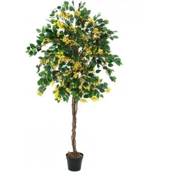 EUROPALMS Bougainvillea, yellow, 180cm