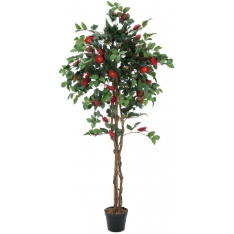 EUROPALMS Camelia red cemented 180cm