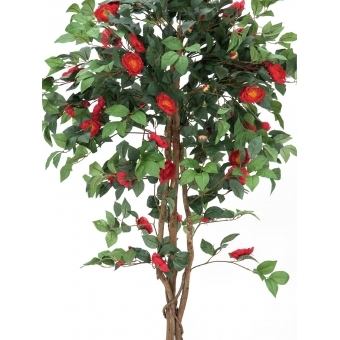 EUROPALMS Camelia red cemented 180cm #2