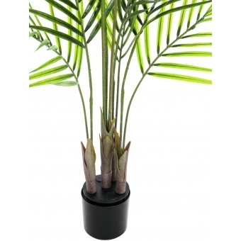 EUROPALMS Areca palm with big leaves, 125cm #2