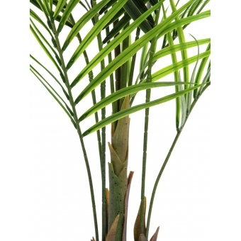 EUROPALMS Areca palm with big leaves, 165cm #3