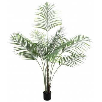 EUROPALMS Areca palm with big leaves, 185cm #1