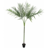 EUROPALMS Areca Palm with big leaves, 180cm