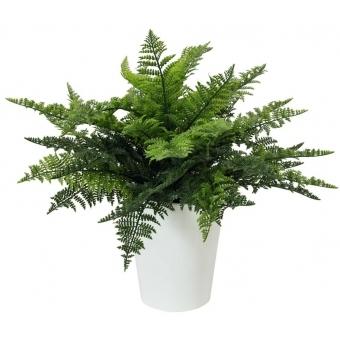 EUROPALMS Fern bush in pot, 51 leaves, 48cm