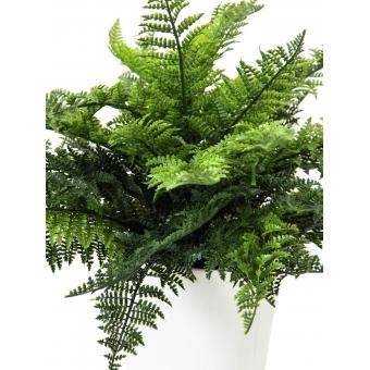 EUROPALMS Fern bush in pot, 51 leaves, 48cm #2