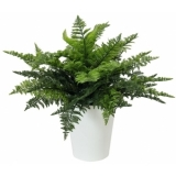 EUROPALMS Fern bush in pot, 51 leaves, 48cm