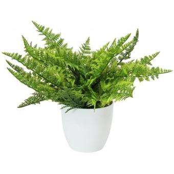 EUROPALMS Fern bush in pot, 22 leaves, 33cm