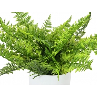 EUROPALMS Fern bush in pot, 22 leaves, 33cm #2