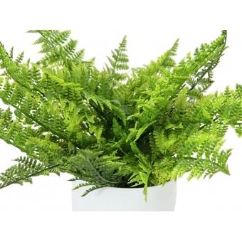 EUROPALMS Fern bush in pot, 22 leaves, 33cm #2