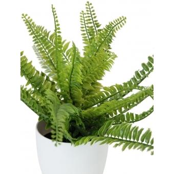 EUROPALMS Fern bush in pot, 62 leaves, 48cm #2