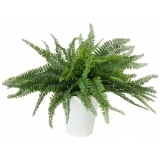 EUROPALMS Fern bush in pot, 62 leaves, 48cm