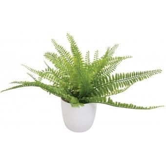 EUROPALMS Fern bush in pot, 26 leaves, 27cm