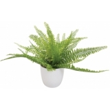 EUROPALMS Fern bush in pot, 26 leaves, 27cm