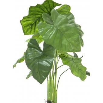 EUROPALMS Caladium plant, 90cm #2