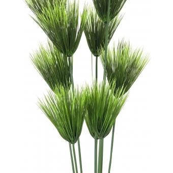 EUROPALMS Papyrus plant, 150cm #2