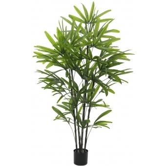 EUROPALMS Rhapis palm, 175cm