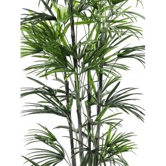 EUROPALMS Fan palm seedling, 150cm #2