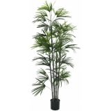 EUROPALMS Fan palm seedling, 150cm