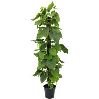 EUROPALMS Pothos plant, 180cm
